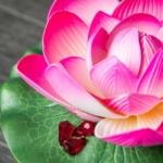 цветочная композиция Лотос